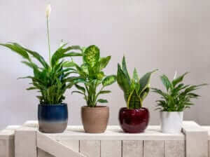 best air purifying plants which remove toxins
