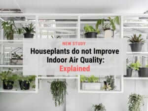 Indoor houseplants do not improve air quality Explained