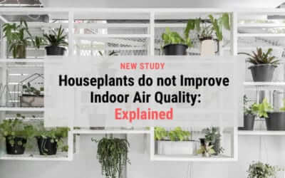 Houseplants do not improve air quality: Explained